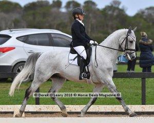 Deltry Valentino ridden by Deborah Ambrosini in the Medium 4.3