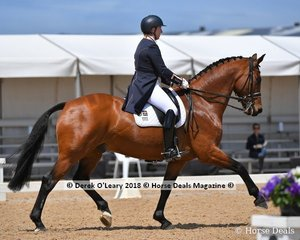 Lets Jazzabit ridden by Lizzie Wilson Fellows in the FEI Prix St Georges Stars of the Future placed 4th with a score of 68.647%