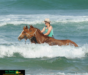 In preperation for her jumping weekend, Kylie Zabel introduces two of her horses to the waves at Cabarita Beach.