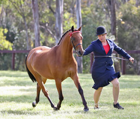 """Winner of the class for Part Welsh Mare or Geldings 4 years & over, over 12.2 not exceeding 13hh - """"Kiabe Raphael"""" exhibited by Annabelle Giles."""