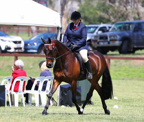 """Fernbrook Stud's exhibit """"Fernbrook Playwright"""" pictured working out in the event for Newcomer Part Welsh Mare or Gelding, over 13.2hh."""