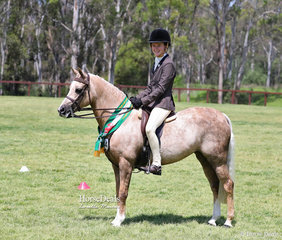 "Champion Ridden Show Hunter over 13hh ""Elmridge Roxy"", exhibited by Gregory & Lonsdale."