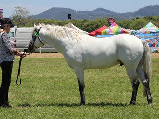 Supreme Led Stallion