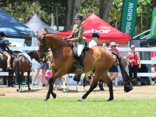 Champion Hunter Hack exhibited by Allara Paxton