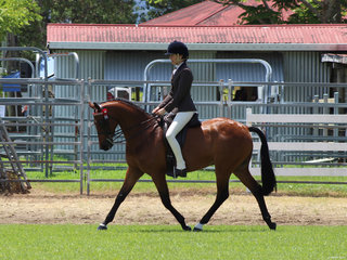 Kristy Hill Lillback working out to place in the large Pony