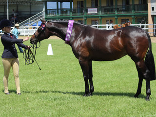 Champion Led Saddlepony Farleigh Anastasia exhibited by Isabella Cross Winston