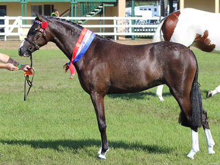 winner of the 2 year old futurity