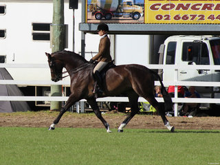 Reserve Champion Hunter Hack exhibited by Adam Oliver
