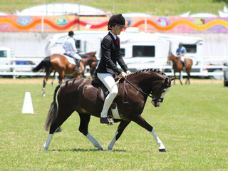 Champion Novice Pony Salron Park Showman ridden by Charlee Anthony