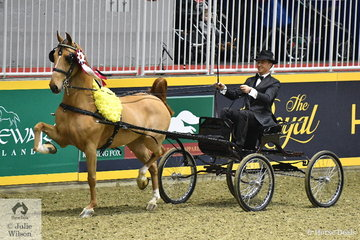 Adam Bouaird drove his own, 'Heartland Good Bye' to claim the Hackney Horse Amateur World Championship. The horse is pictured during the lap of honour sporting his winning blanket of flowers.