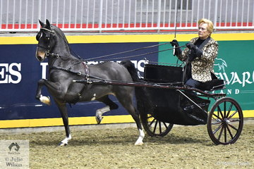 Carole Wesson drove her own , 'The Fresh Prince' to claim the $2000 Hackney Harness Pony Canadian Championship.