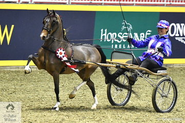 Kathryn Earehart drove her own, 'Hollywood Star' to claim the $1500 Single Roadster Amateur Championship. The Roadster classes are popular with the drivers in racing silks and the ponies/horses, mostly Hackneys driven at great speed around the arena.