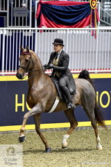 """There is a new competition this year entitled """"Royal Battle of the Breeds'. This was not really what we expected as all breeds, Saddlebred, Arabian, Morgan etc were ridden in this decidedly North American """"plantation"""" style, with the fancily dressed riders sitting in the back seat as many of the horses  go in that five gaited """"racking"""" style. They love it here. Anyone who was at the 2010 WEG in Kentucky will recognise this style of riding and going. Ashley Cook -Fletcher is pictured aboard Darlene Cook's Saddlebred, 'Encore Cherie'."""