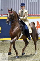 Lauren Rivard is pictured aboard her Saddlebred stallion, 'Heir Day's great Treat' during the Royal Battle of the Breeds.