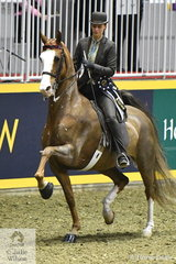 Natalie Martens rode her Saddlebred, 'Reedann's What A Looker' to take second place in the Thursday edition of the Royal Battle of the Breeds'.