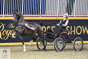 Joanne Heath drove her own and Laurie Palmer's, 'Made You Look'  to win the $1500 Single Hackney Pony Amateur Championship.