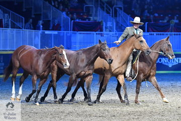 Australian, Guy McLean, back at Toronto for a third visit had the evening crowd in the palm of his hand during his entertaining and impressive display of horsemanship.