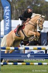 "Paris Ow-yang represented NSW riding ""Cayuse Alveeno"" in the Australian Children's Championship"