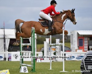 """Charlie Kinder from NSW riding """"Renmarno"""" placed 6th in the Australian Junior Championship"""