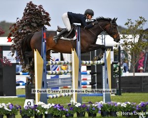 """Lucie Aldridge from also NSW placed 3rd in the Australian Junior Championship, riding """"Ollie Olae"""", NSW certainly dominated the Junior class this year with 1st, 2nd, 3rd, 5th, 6th, 8th and 10th 11th, 12th, well done team NSW."""