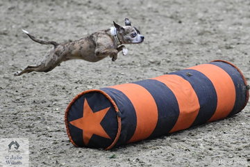 """The $25,000 Equine/K9 Challenge involved pairing a dog with a rider on horseback, each completing a round against the clock. """"Pigeon' was partnered with Devin Ryan from the US who took third place in the class. Devin earned $4000 for his effort, so it was certainly more than just a bit of fun."""
