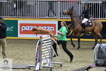 During the K9/Equine Challenge, Karen Polle watches admiringly as her canine partner, 'Honour' makes a super leap over his final obstacle. Karen and her , 'Little Lord 90' won the class.