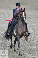 Miller Young Fina has had a successful show with Jessica Mann Baker's Morgan Horse, 'Maximum Velocity' and won the final round of the  Open Saddle Seat Battle of the Breeds.