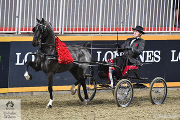 Devon Morrow drove David McDonald's, 'Highland Chiefton' to take out the $5000 Hackney Horse World Grand Championship Stake. And yes they are real flowers.