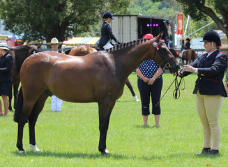 Champion Led Riding Pony Granchester RM exhibited by Leanda Scott