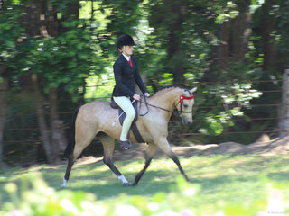 Reserve Champion Novice pony Langtree Del Esprit exhibited by Charlee Anthony