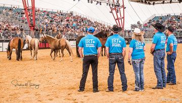 Our Trainers make their horse selection in The Way Of The Horse competition