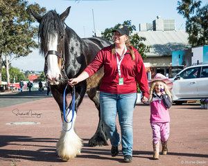 5yr old Shire Gelding 'Dragon' with his owner Em Stonham and her niece Ashleigh aged 3