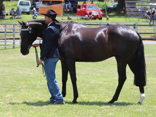 Aaron Lang with his Champion Led Thoroughbred