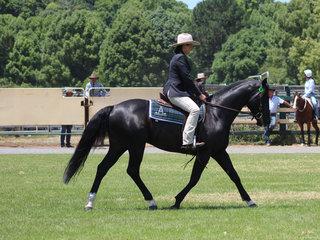 oanne Robson in the Ridden ASH Stallion