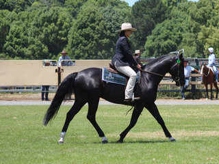 Joanne Robson in the Ridden ASH Stallion