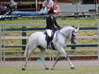 Champion Hack Dicavali Royal Georgio ridden by Amanda O'Sullivan