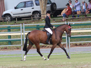 Reserve Champion Galloway Tremayne Royal Opera ridden by Charlee Anthony