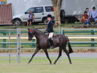 Champion Galloway Tolea Park Mercury Rising owned by Barbara Barr and ridden By Adam Oliver
