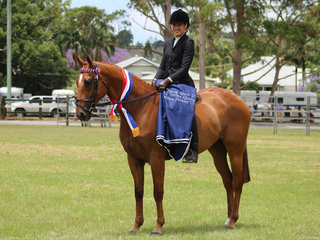 Champion OTT Bangalow show winner Satorialist exhibited by Nicola Emanuel-Nicail