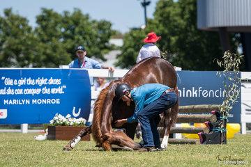 Brumby Challenge Final, Flinders Greentree and VBA Brandy