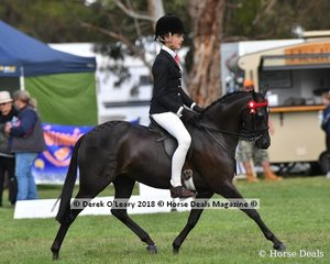 Bellevale Hearts A Quiver (S:Roseden Beyond Expectations D:Kirreway Elitist) exhibited by Riley Marin in the Open Small Pony.