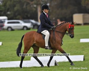 Rhyl Monarque (S:Turberry Tom Kitten (IMP) D:Rhyl Matinee) exhibited by Marcia Beard was the winner in the Open Small Pony.