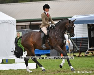 AKS Rumor Has It (S:Royal Hit (IMP) D:Rapunzel R) exhibited by Abby Heffer in the Showhunter Small Hack.