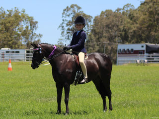 Champion Ridden Derivative Bordershow Brandy Alexander ridden by Anastasia Blanch