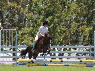 Pony Jumping a new class added to the program pictured is LLANGOLLEN MAGENTA  ridden by Hope everson