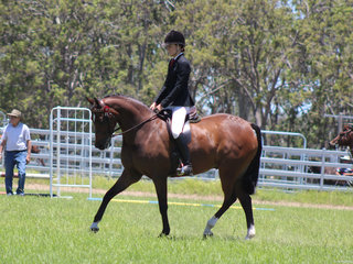 Champion Ridden ANSA Tremayne Royal Opera exhibited by Charlee Anthony
