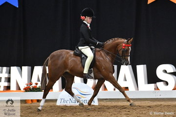 Back where she belongs. Now representing South Australia., one of the great small ponies of the modern showing era, 'Newingtin Tinkerbell' ridden by Ella Manning and owned by Catherine Gale claimed her third National Small Pony Championship. (2015, 2017, 2018).