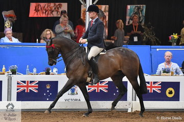 So far a short but brilliant career for Leah Walsh's, 'KP Royal Prince' by Royalwood Boy Soprano. Ridden by Simon Deleeuw and representing NSW, Royal Prince was declared 2018 National Champion Small Hack receiving the Pauline Van Heythuysen Memorial Trophy.