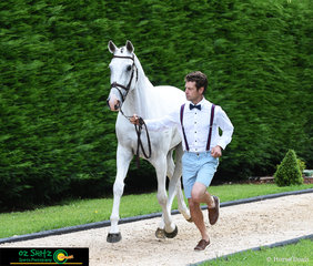 Chris Burton trots out Coopers Crossing at the Wallaby Hill Three Day Event CCI One Star trot up.