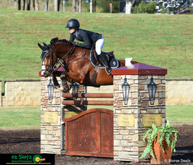 Jumping effortlessly over the Stal Tops Sponsored jump is Jamie Priestley riding  Kolora Stud Optimus, the pair jumped clear and with a time of 63.33 in the Young Riders Series Qualifier at the Summer Show Jumping Classic.